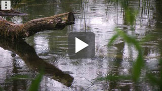 Teich bei Regen - mit Play-Button