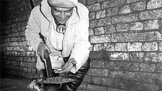 Sewer cleaner in a sewer, 1945