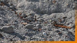 Nahaufnahme von Aschenschlacke auf der Deponie Rautenweg