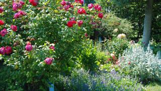 Englischer Garten In Den Blumengarten Hirschstetten