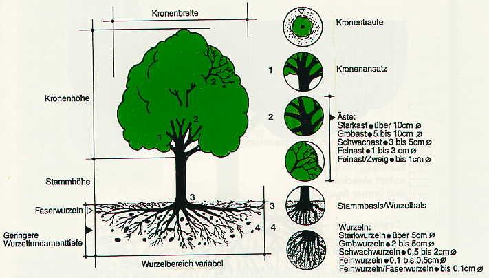 Maßnahmen zum Schutz von Bäumen im Bereich von Baustellen - Wiener Stadtgärten