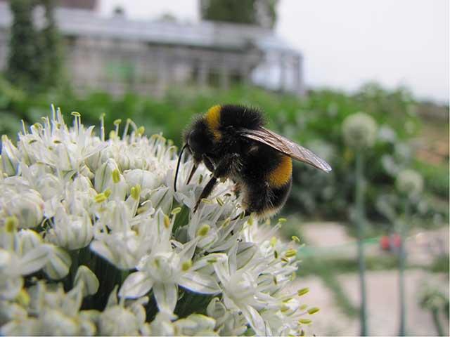 Wildbienen Vielfalt Durch Passenden Lebensraum