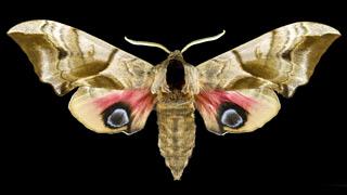 insektenfreundliche lampen