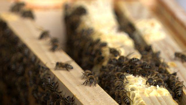 Bio-Honig vom Cobenzl