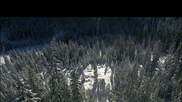 Wiener Wälder - Teil 1 von 4