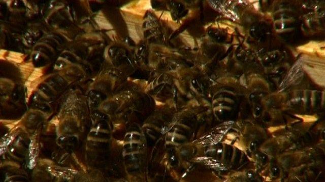 Wo Großstadtbienen zu Hause sind Imkerschule Donaupark