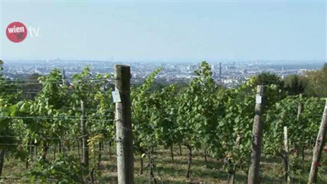 Wiener Wein - Jahrgang 2012