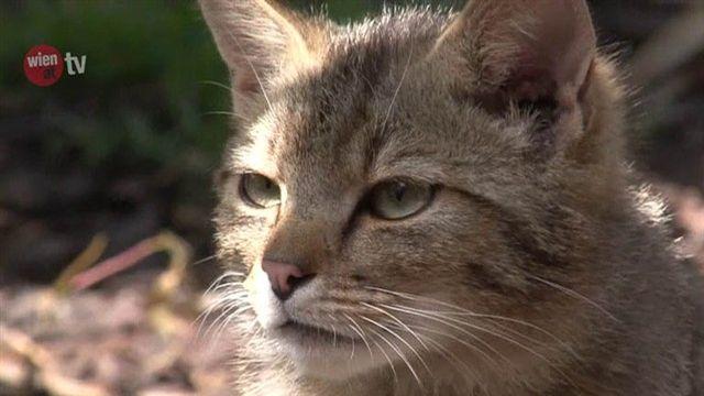 Wildkatzengehege in Hirschstetten