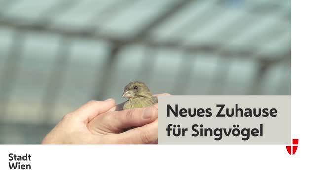 Neues Zuhause für Singvögel