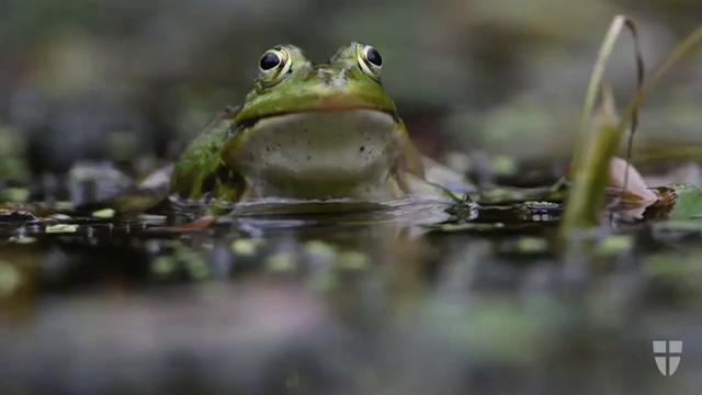Amphibien in Wien - Wiens geschützte Tierwelt