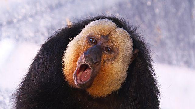Gib dem Affen Zucker